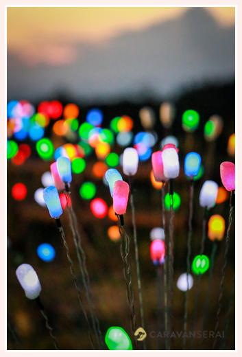森の中(屋外)で結婚式(披露宴)ブライダル/夢ほたる・LEDランプ