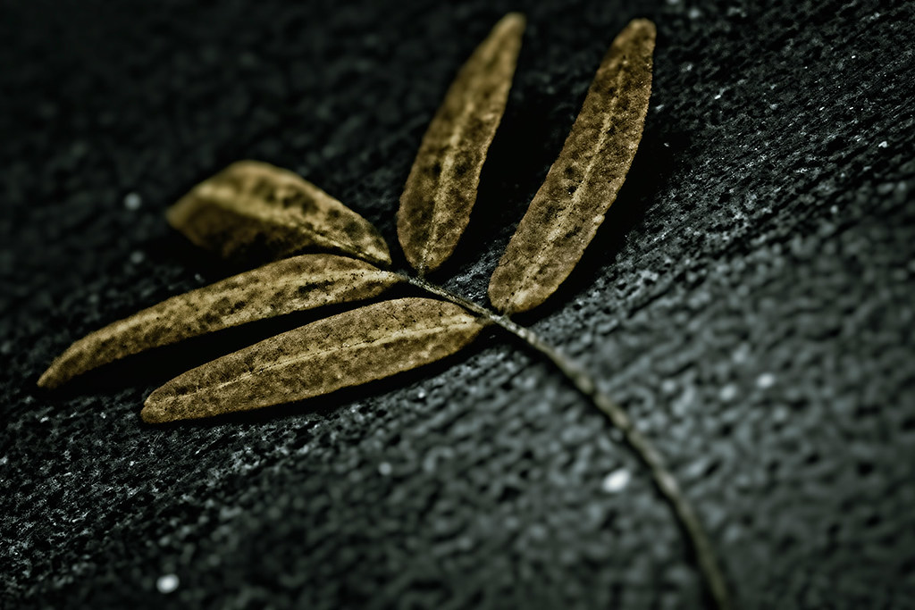 Leaf on sidewalk, Downtown Denver