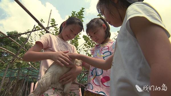 969-2-02s從小就被剪嘴的母雞小天使,在友善牧場裡享受著孩子的溫暖懷抱。