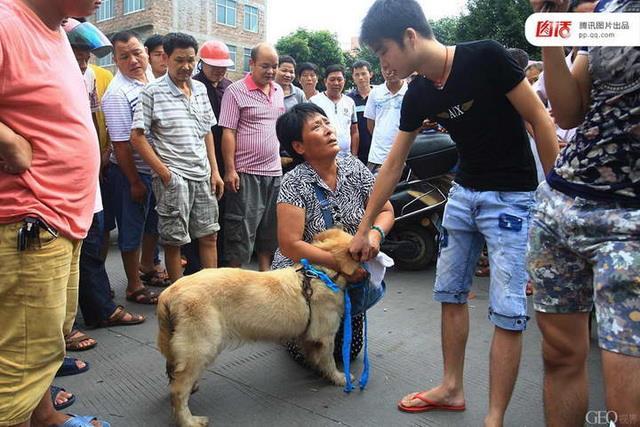 每年爭議不斷的「廣西玉林狗肉節」裡,動保行動者哀求人們刀下留情,遭到狗肉業者哄抬狗價、虐狗示威的訕笑,突顯出不同的動物態度之間強烈的衝突。