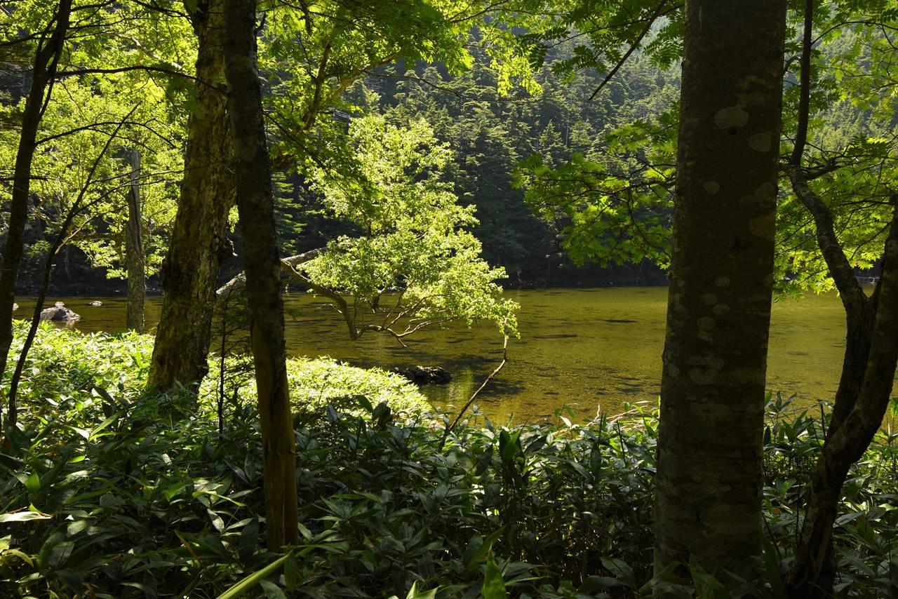 木陰からの亀甲池