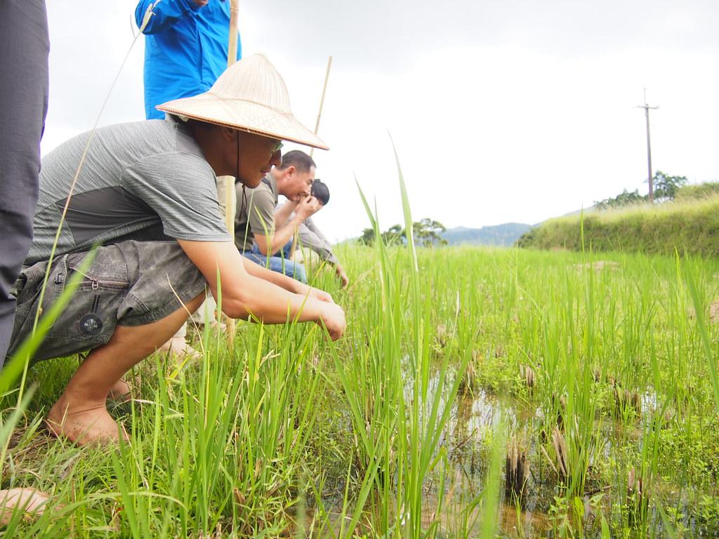 郭俊麟和中國綠色人物們蹲在田邊觀察水生植物