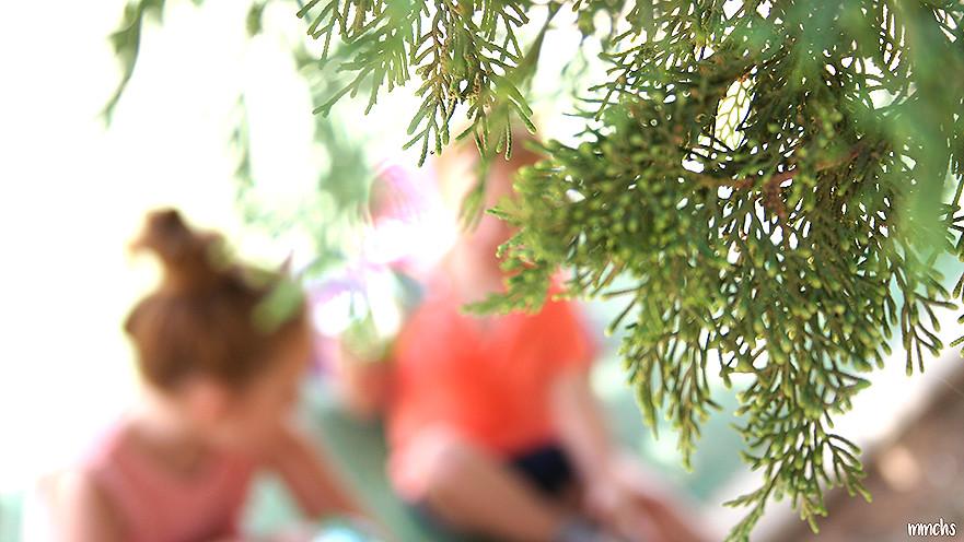 árboles del parque central de Paterna