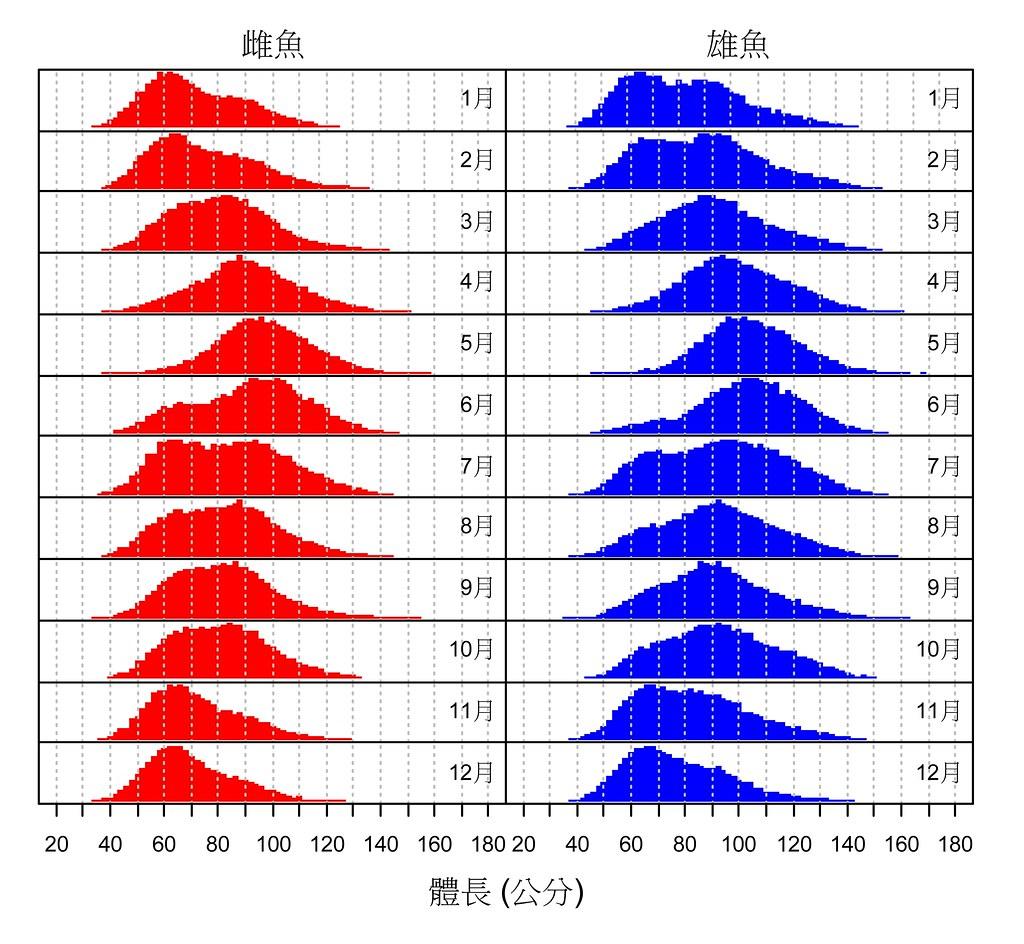 台灣東部海域鬼頭刀之月別漁獲體型分佈頻度變化