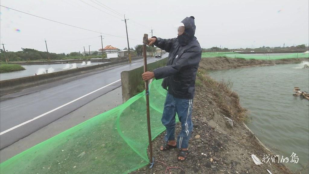 970-3-05s養殖漁民陳先生,利用簡易的圍網方式,防止大水沖走養殖的吳郭魚。