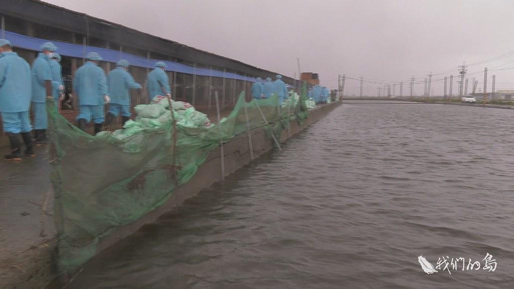 970-2-13s位在嘉義縣朴子的養雞場已經加高地基,遇到前所未有的強降雨,還是造成嚴重損失。