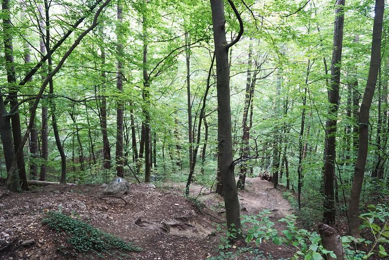 forest in Brasov