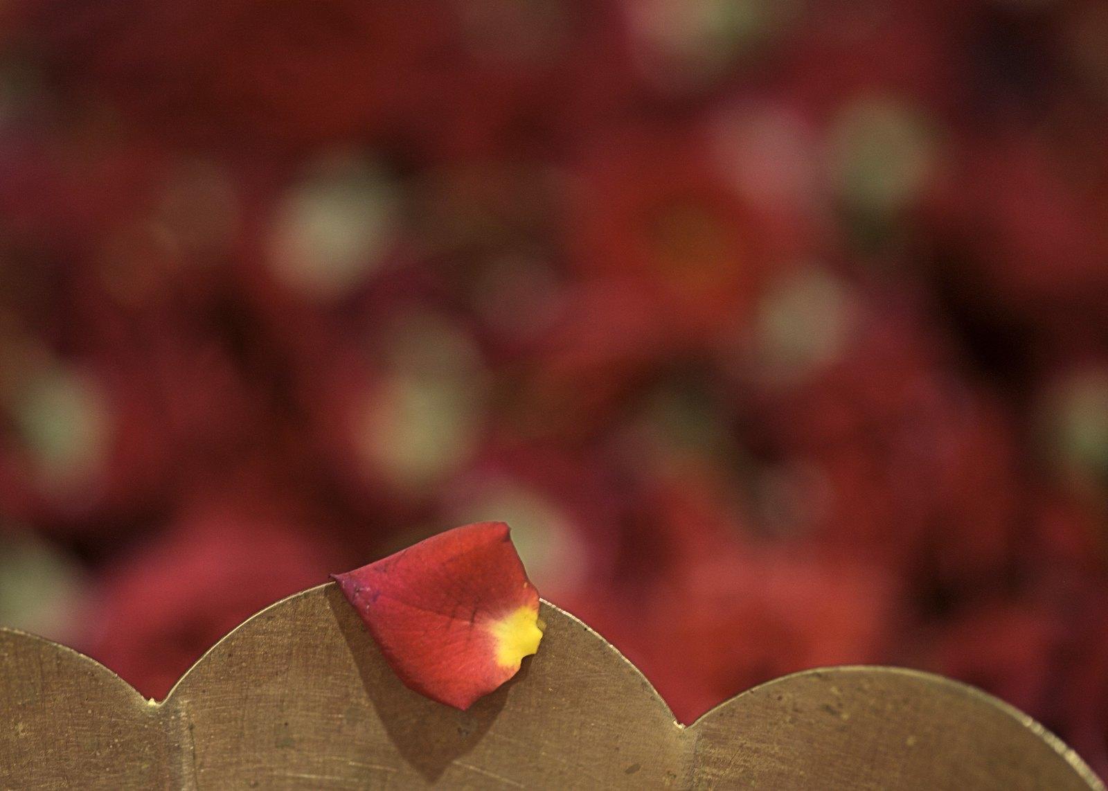 Rose Petal Pentaxforums