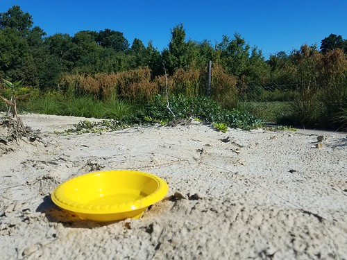 small plastic bowl catching wasps in a sand dune. it is partially filled with soapy water