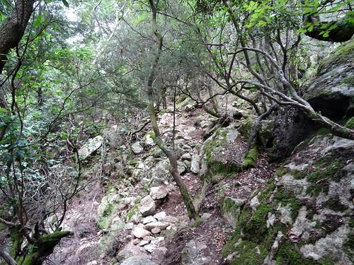 Dans la redescente du chemin du Carciara aval : dalles et marches dans la traversée du petit ruisseau