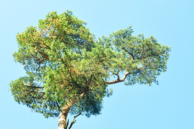 September 2018 - Rheinauer Wald in Mannheim - Wildschweine, Eicheln, herbstlich gefärbte Brombeerblätter ... Foto: Brigitte Stolle