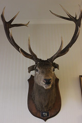 Hunting was an integral part of the family story - a tropy in the Guest House