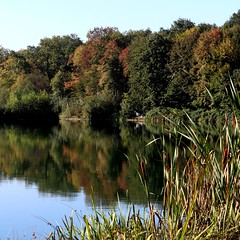 Early autumn lake IV