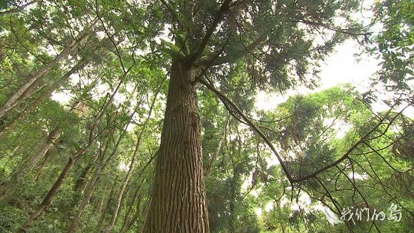 968-1-38s環保團體建議疏伐之後產生的空間,試著找到在地本土的植物作為經濟作物,會更省力。