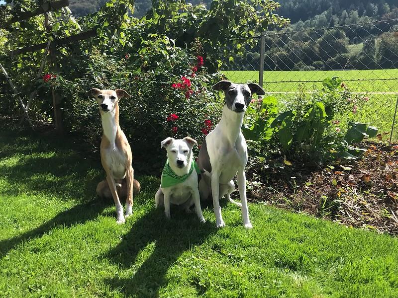 Annie mit ihren beiden Freundinnen Fee (die gerade 14 Jahre alt geworden ist) und Izzie