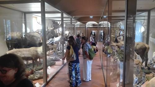 visita alla galleria degli ungulati