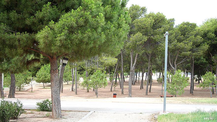 pinada del parque central de Paterna