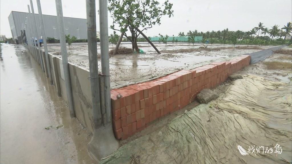 970-3-11s文旦農民表示,文旦樹雖然不怕水淹,但泡水太久仍會降低品質,他陸續將果園土地墊高,設置防水牆作為防災之道。