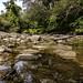 Mimico Creek 03