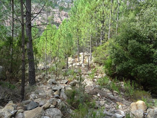Au retour vers l'aire de pique-nique : la bifurcation du ruisseau de Peru vers le chemin du Carciara