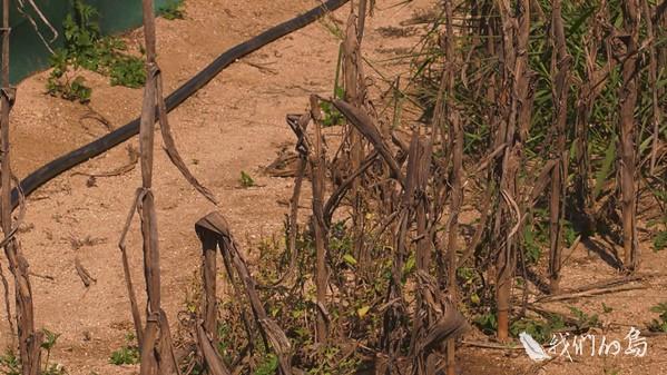 968-2-03s鄉長吳政杰說,油庫附近是全鄉地勢比較低窪、水源比較豐富的農業區,很多農民都覺得有受到污染。