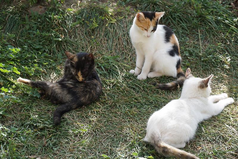 kittens Rasnov