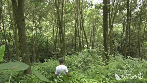 968-1-05s林農呂崇維二十年種出十六萬棵台灣肖楠,從農田回復成森林,他讓底層維持著豐富度,野生動物成為他的常客。