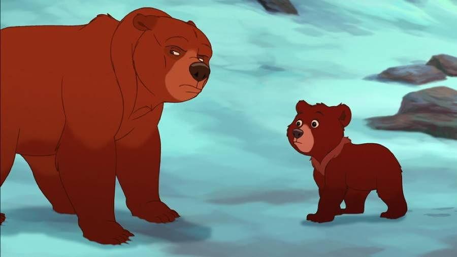 hermano-oso-2