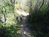 Démaquisage à la traversée de Piscia Cava sur le PR4