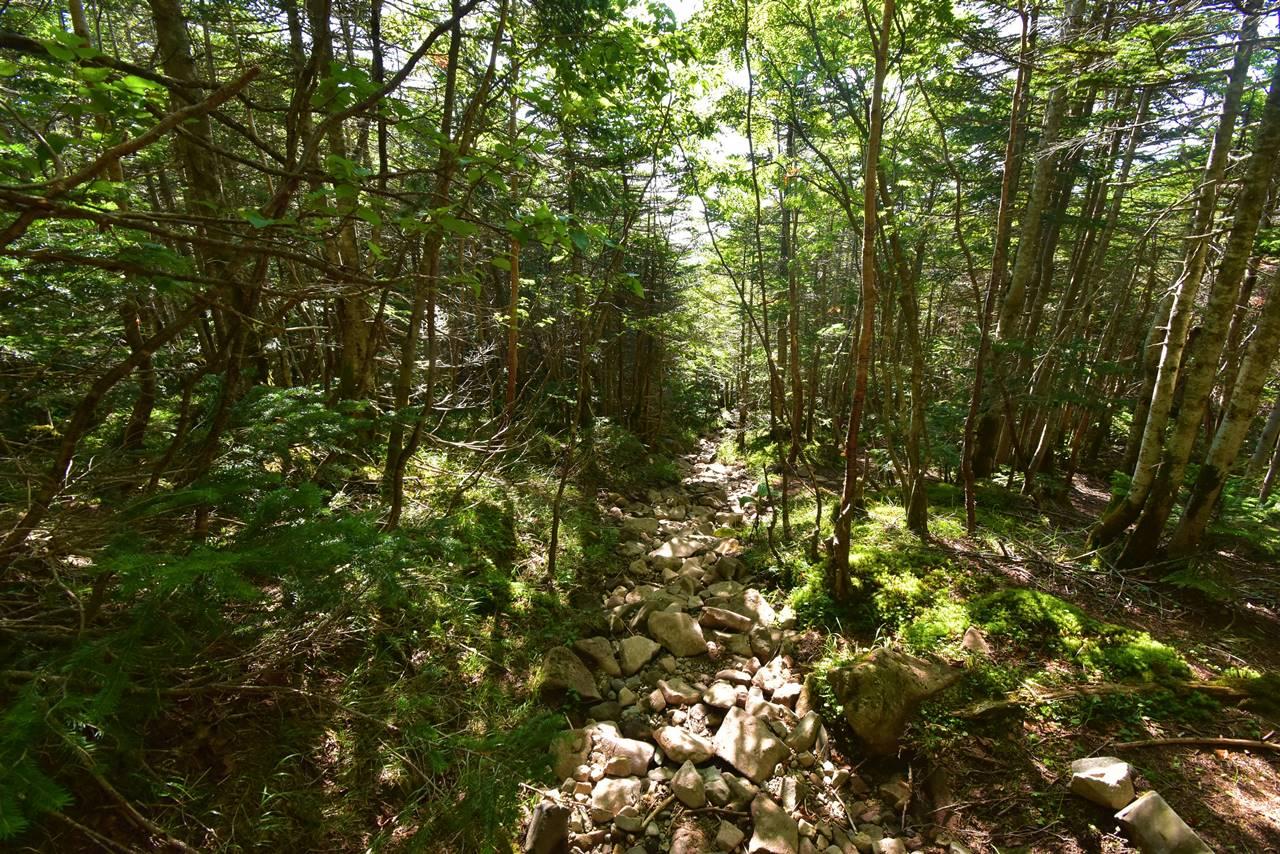 蓼科山荘から天祥寺原への登山道