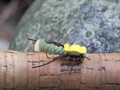 Foam grasshopper fly shown up close