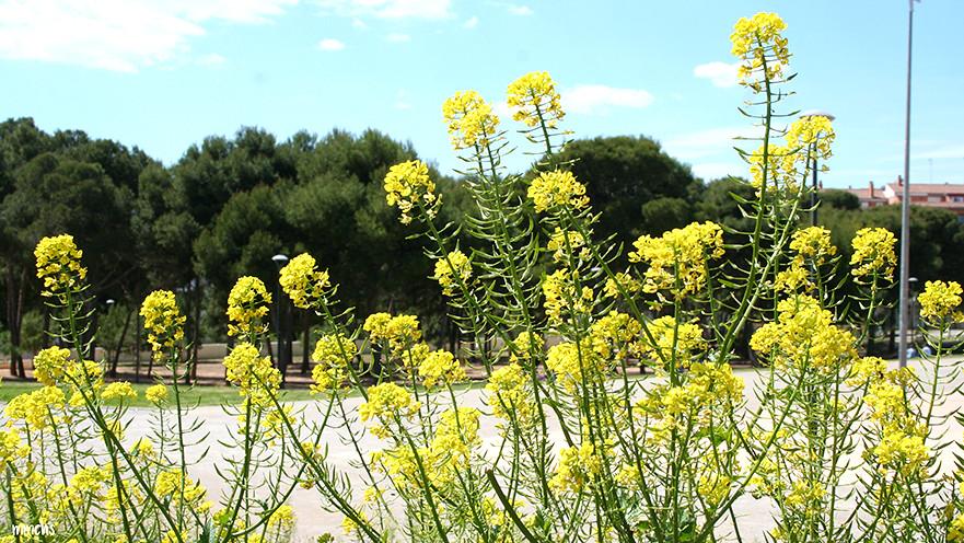 plantas parque central de Paterna