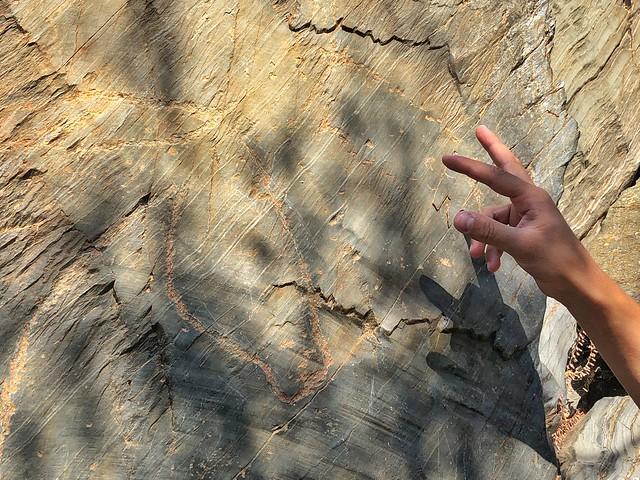 Caballo en la zona arqueológica de Siega Verde (Salamanca)