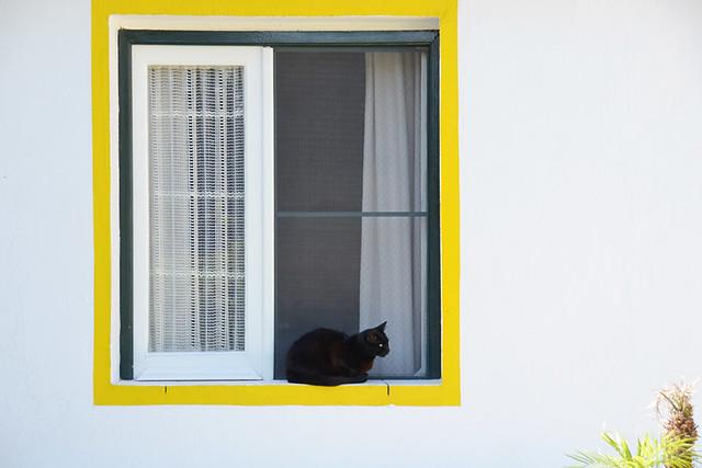 Feline friend, Palmela, Portugal