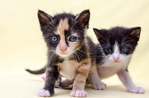Martín, gatito blanquinegro guapísimo y súper listo nacido en Julio´18, en adopción. Valencia. ADOPTADO. 44219335451_05c75d405e