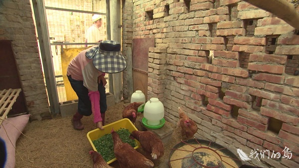 969-2-12s高雄鳥松一群退休的長輩們,在母雞的身上,找到了人生的新意義。