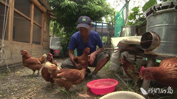 969-2-19s楊環靜希望培養有實地養雞經驗的長輩,成為帶領消費者認識母雞的媒介。