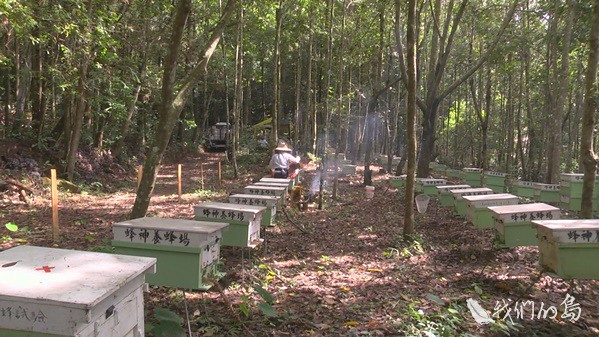 968-1-27s蜂農與林試所合作,利用這片林下空間進行林下養蜂試驗,半徑三公里的範圍內都是原始林,天然的蜜源植物種類很多。