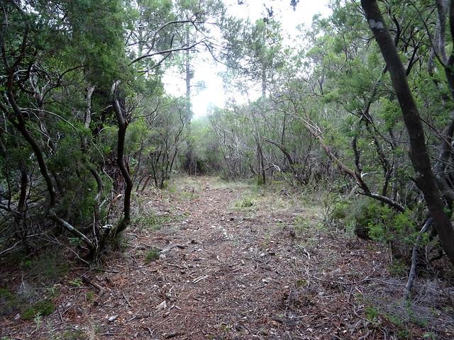Dans la redescente du chemin du Carciara aval : entre la brèche et le ruisseau de Pinu Neru