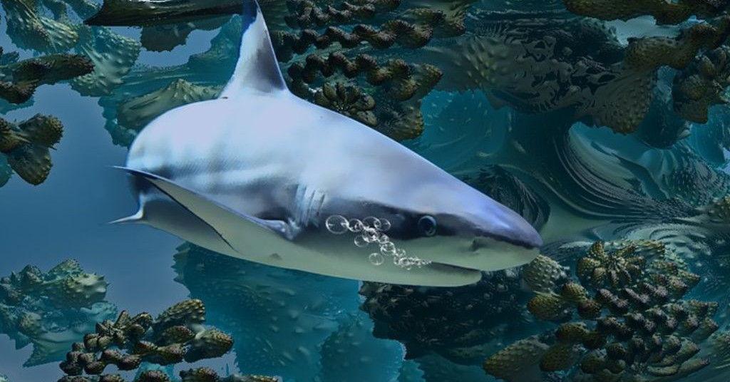 fractal-shark