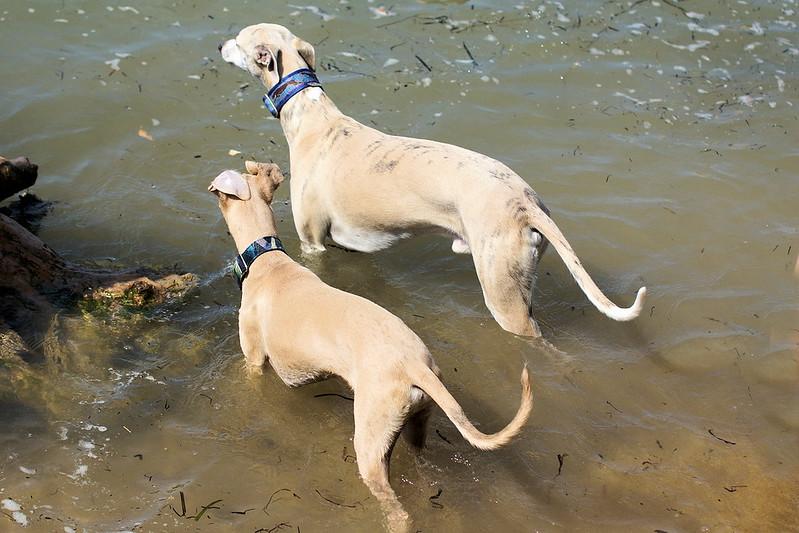 Lieber Halbbruder, glaubst du echt wir können uns in die Fluten werfen?