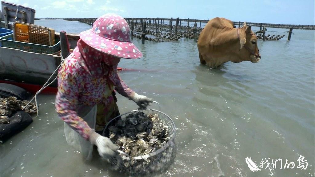 971-3-09濱海濕地是居民的生產地區,創造珍貴的蚵田經濟,也成為生態旅遊地點。