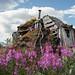 Ye olde cabin
