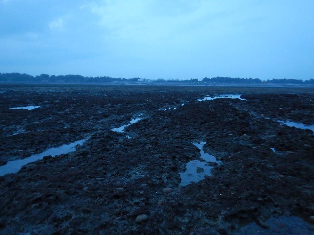 清晨的藻礁面貌