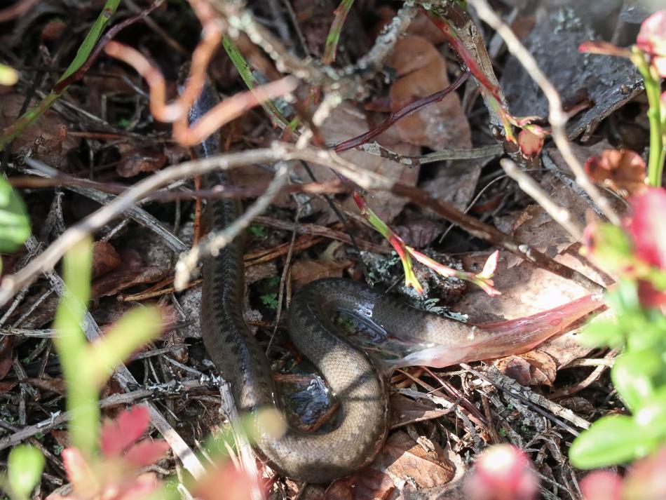 /Newborn baby snake