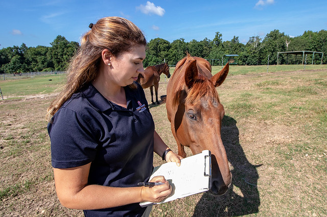 Jessica Brown works with a horse in a pasture