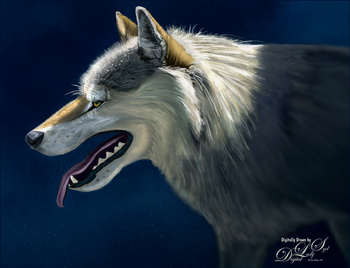 My Drawn image of a wolf