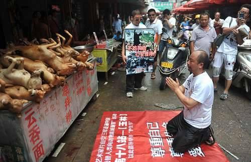 被稱作「動保藝術家」的片山空,親赴「廣西玉林狗肉節」向動物屍體下跪,引起社會關注。