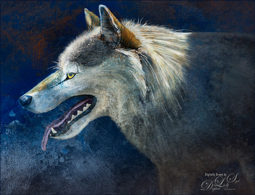 My drawn image of a Wolf on the Hunt