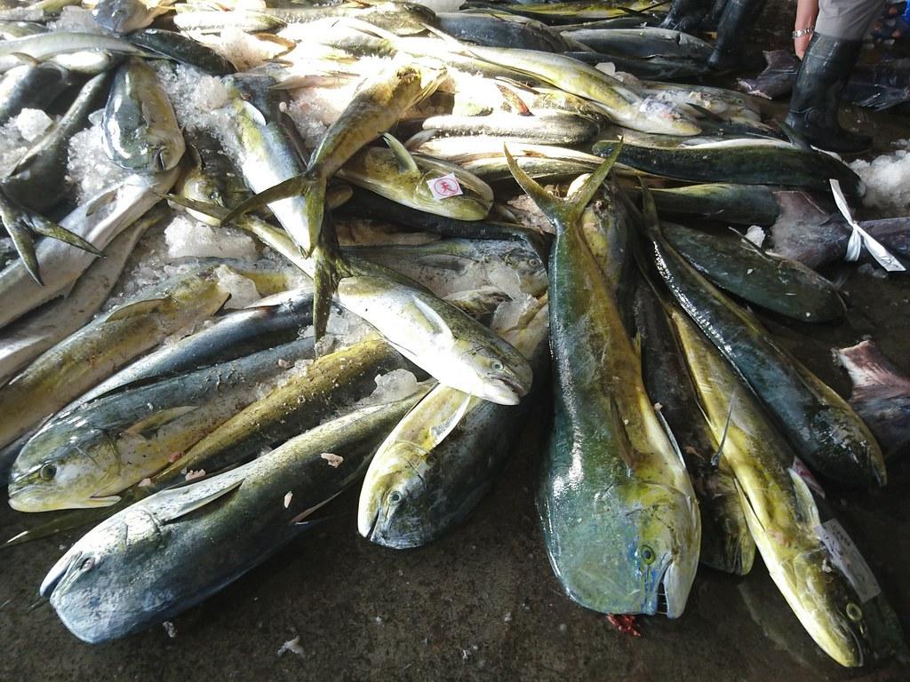 台東縣新港魚市場的鬼頭刀漁獲拍賣。